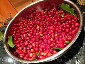Coffee-Cherries_Fotor-LRES