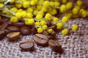 flowers-spring-coffee-1425901674HyA